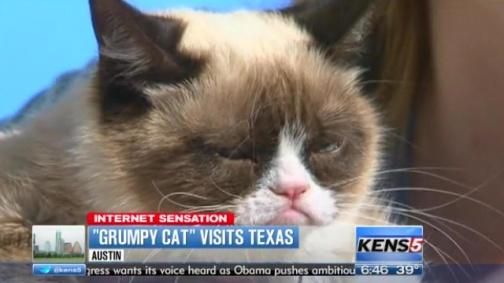 'Grumpy Cat'